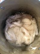 Wool skeins getting mordanted; Photo Credit: Anu Ravi